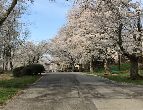 The Amazing Cherry Blossoms and Growing a Business